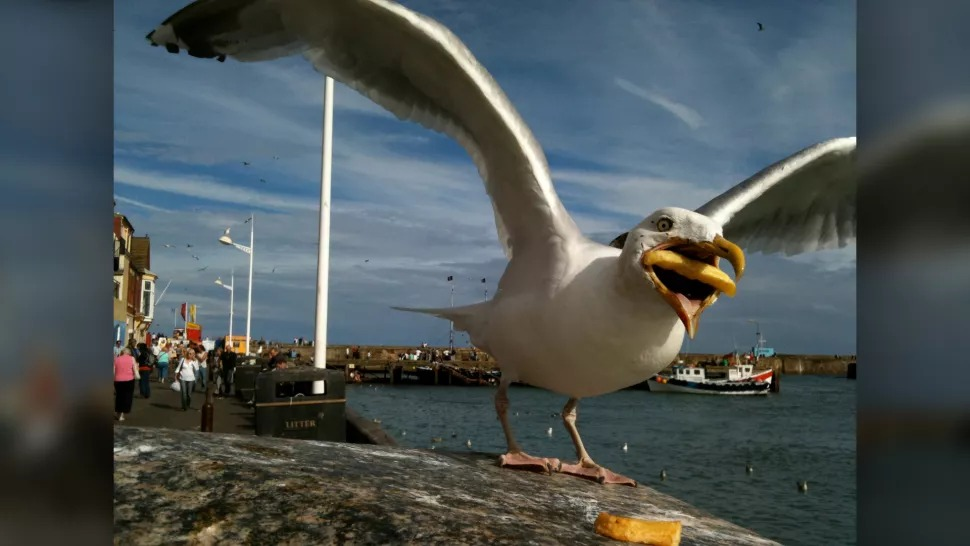 This french-fry-stealing seagull is the star of a new Google ad